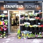 Stanfield Flower